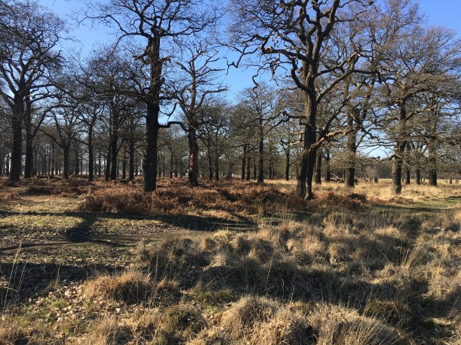 A photo of Richmond Park taken by London Wlogger. Park Walks