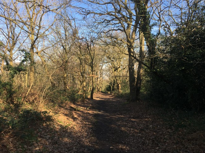 Lesnes Abbey Woods Park Walks