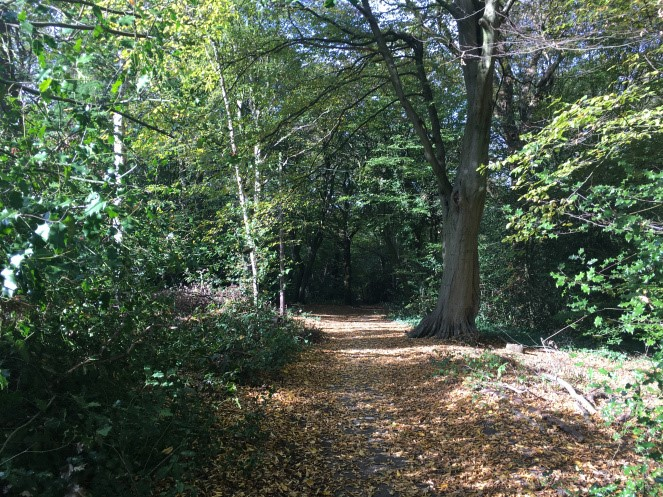 Highgate Wood Park Walks